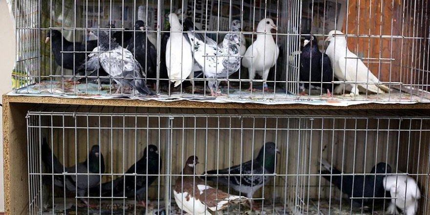 Güvercinler taklayı bu kez 'Perihan' için attı