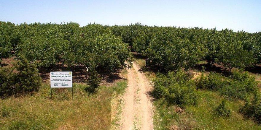Eroğlu: 5 bin köye 5 bin gelir getirici orman kuruyoruz