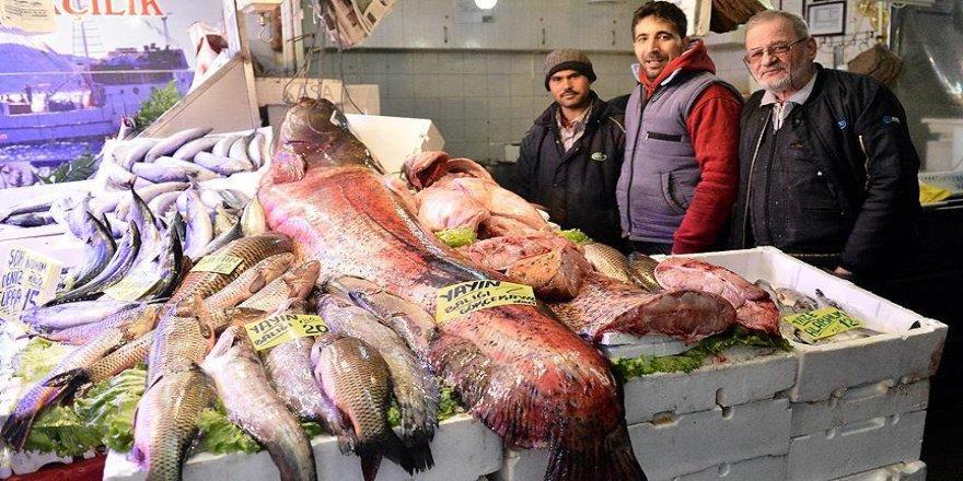 Eskişehir'de 142 kiloluk yayın balığı yakalandı