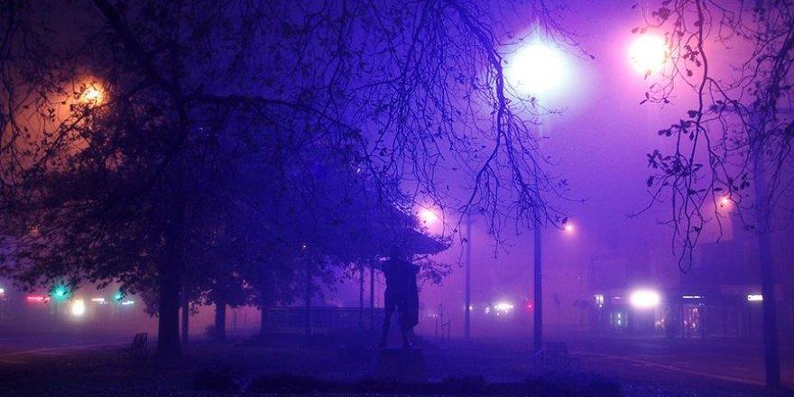 Şehirleri bitkiler aydınlatacak