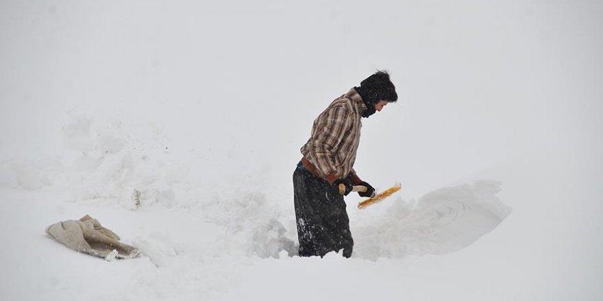Hayvanlarının yemini yarım metre karın altından çıkarıyorlar