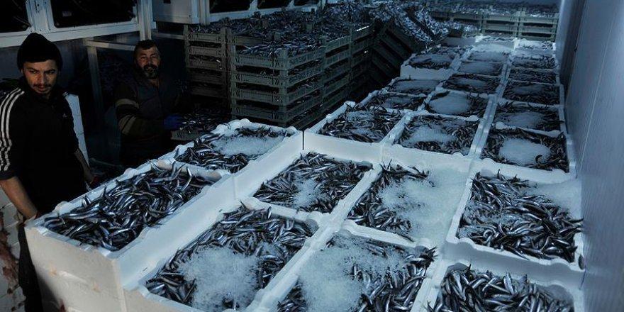 Batı Karadeniz'de bir haftada 2,8 bin ton hamsi avlandı