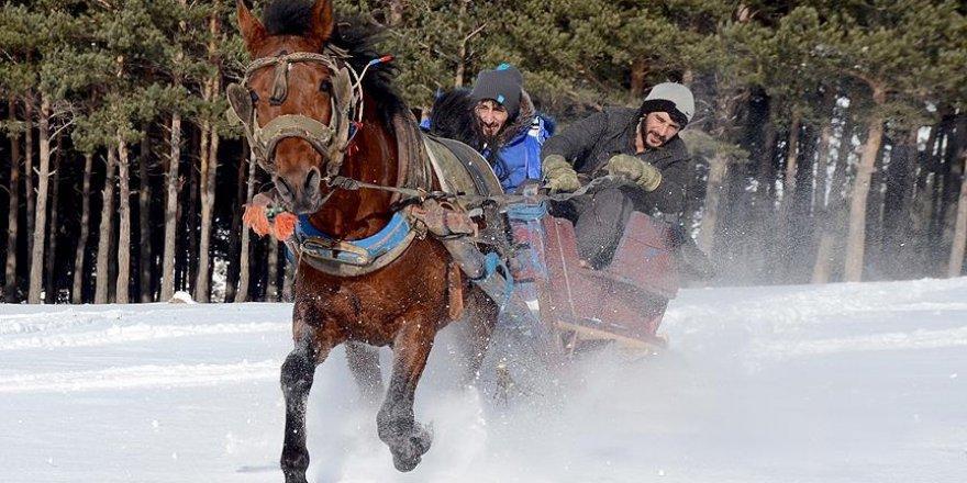 Sarıkamış'ta atlı kızaklar sezona hazır