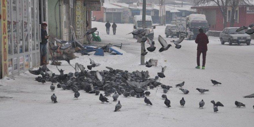 Her sabah kuşları doyuruyorlar