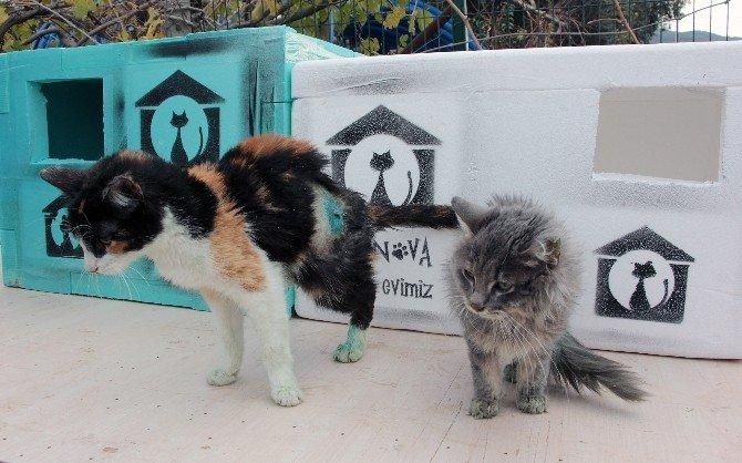 Engelli sokak hayvanlarını sahiplendiler