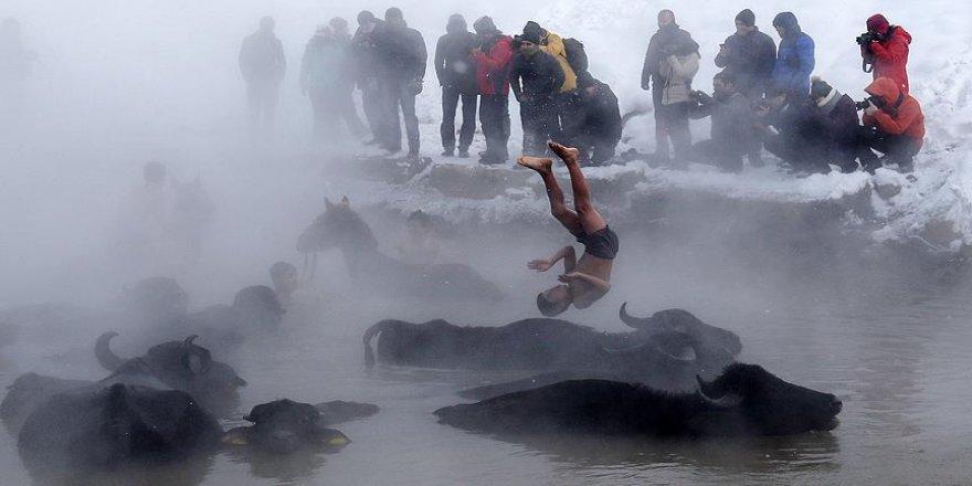 Manda ve atların 'kaplıca keyfi'ni fotoğraflıyorlar