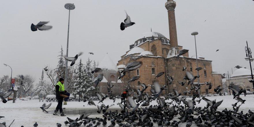 Kuşlara ve sahipsiz hayvanlara yem bırakılıyor