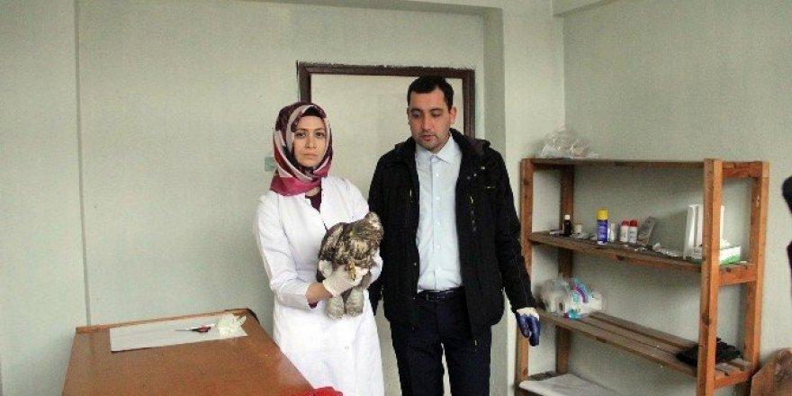 Bolu'da bulunan yaralı Şahin tedavi altına alındı