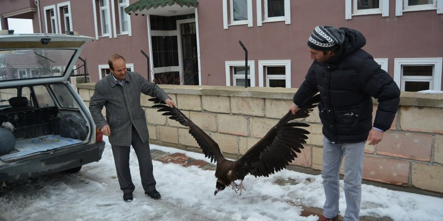 Konya'da yaralı akbaba bulundu