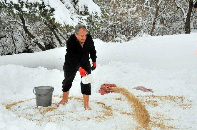 Akşehir Belediyesi  sokak hayvanlarını unutmadı