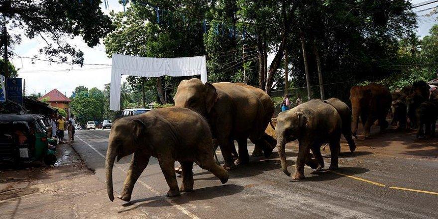 Nepal'de fil sürüsü köye saldırdı