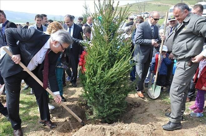 Yıl başında ağaç kesme fidan dik