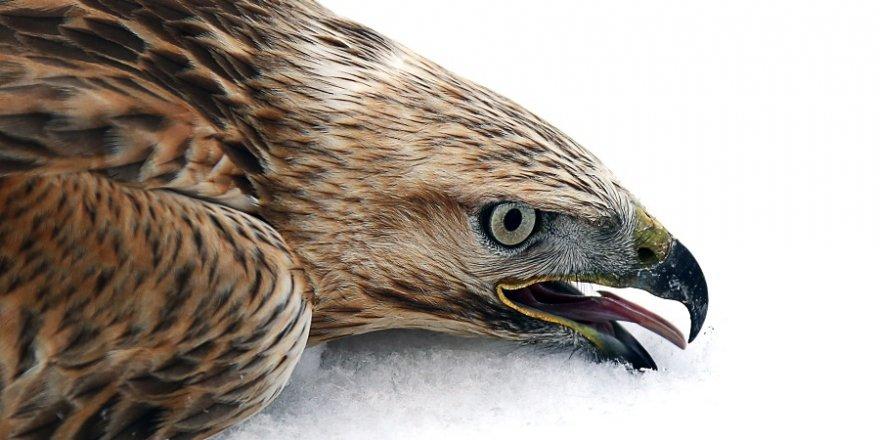 Ağır kış şartları yaban hayvanlarını da zorluyor