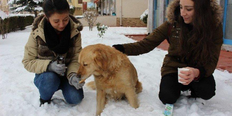 Aç köpeği elleri ile beslediler