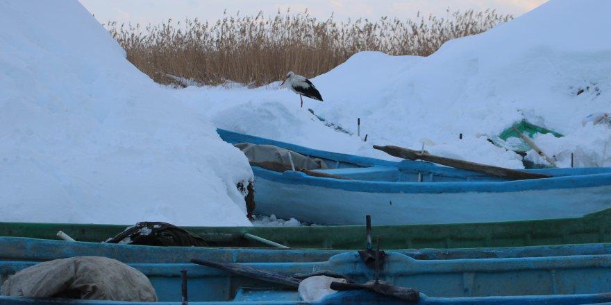 Beyşehir'de iki yıldır göç etmeyen leyleği balıkçılar besliyor