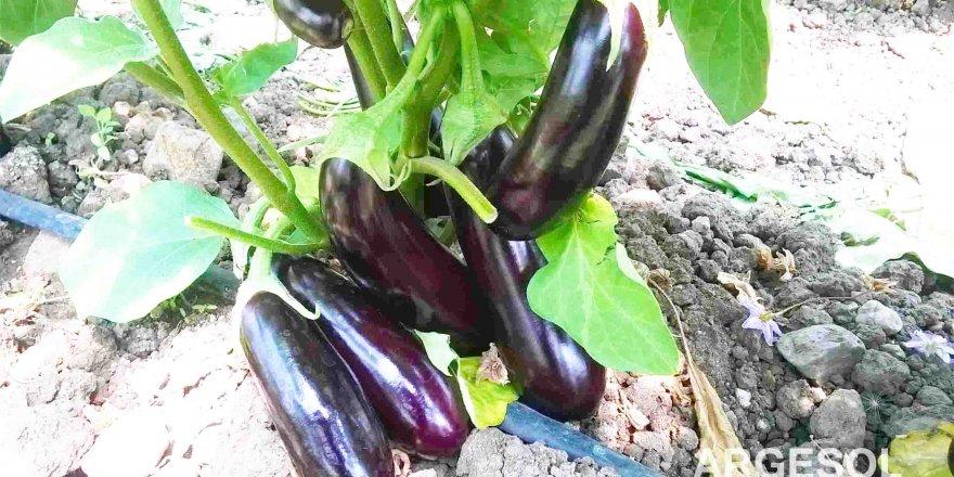 Konya'da fiyatı en çok artan patlıcan oldu
