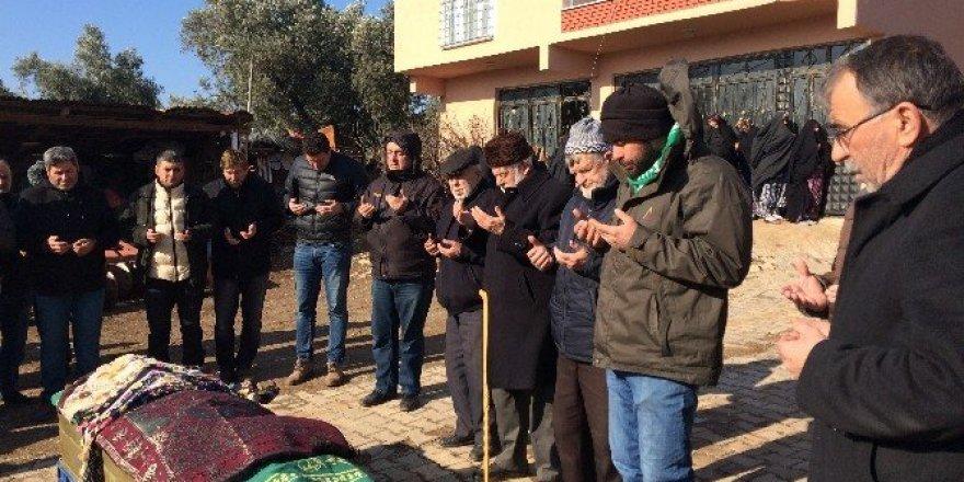 29 torun sahibi asırlık çınar toprağa verildi