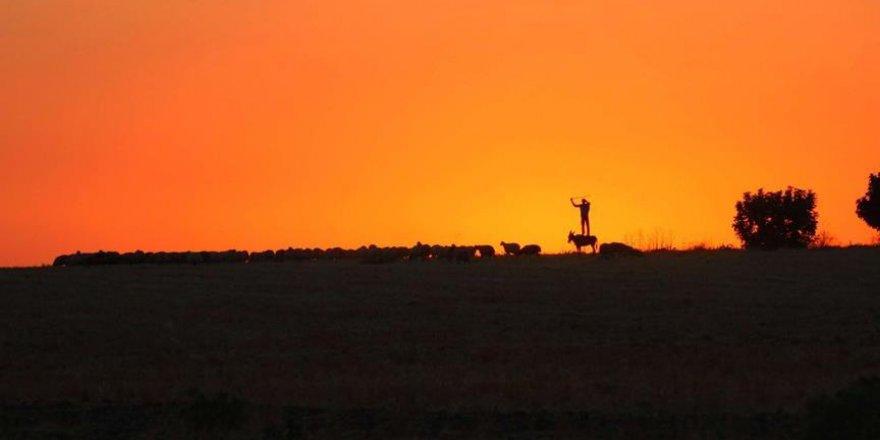 Çoban sorununa 'sınır ötesi' çözüm arayışı