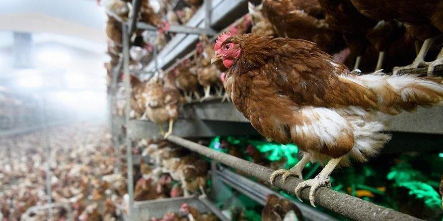 Bulgaristan'da kuş gribi