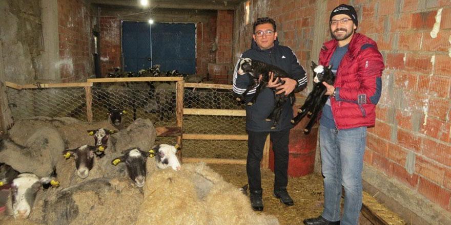Yalıhüyük Romanov koyunu ile tanışıyor