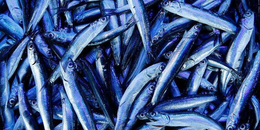 Karadenizli balıkçılar hamsiyi Gürcistan'da arayacak