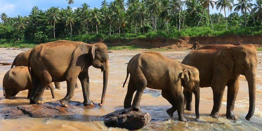 Fil sürüsü köye indi: 5 ölü