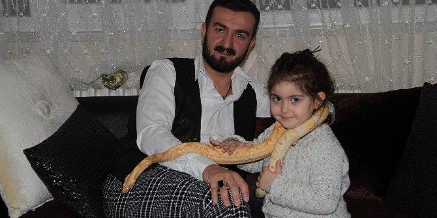 Yılan korkusunu yenmek için evinde yılan besliyor