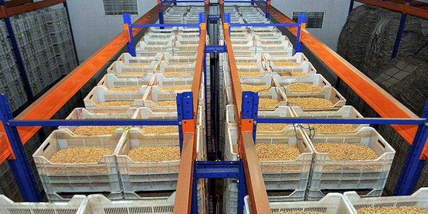 Hububat, bakliyat ve yağlı tohumlarda ihracat rekoru