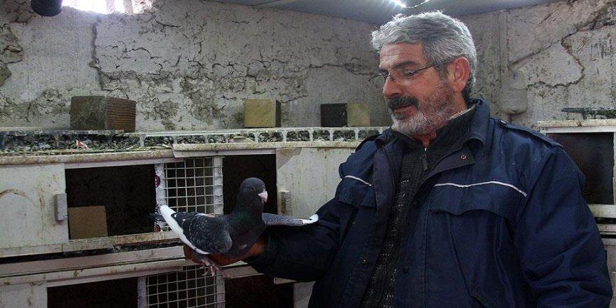 Kepçeyle duvarı delerek güvercin çaldılar