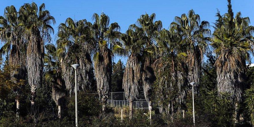Bu koleksiyon palmiyelerden