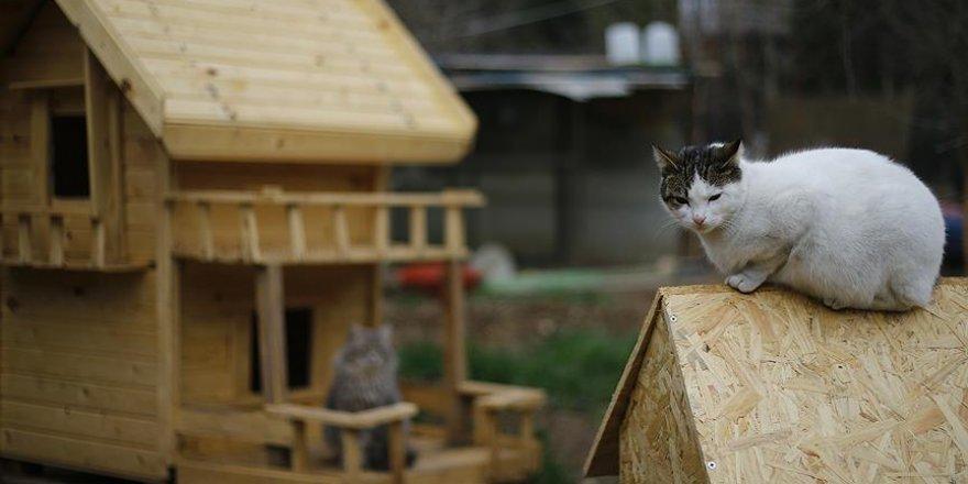 Sokak kedileri için 'köy' kurdular