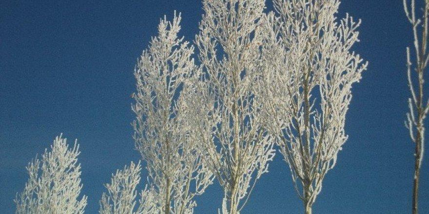 Özalp'ta ağaçlar dondu