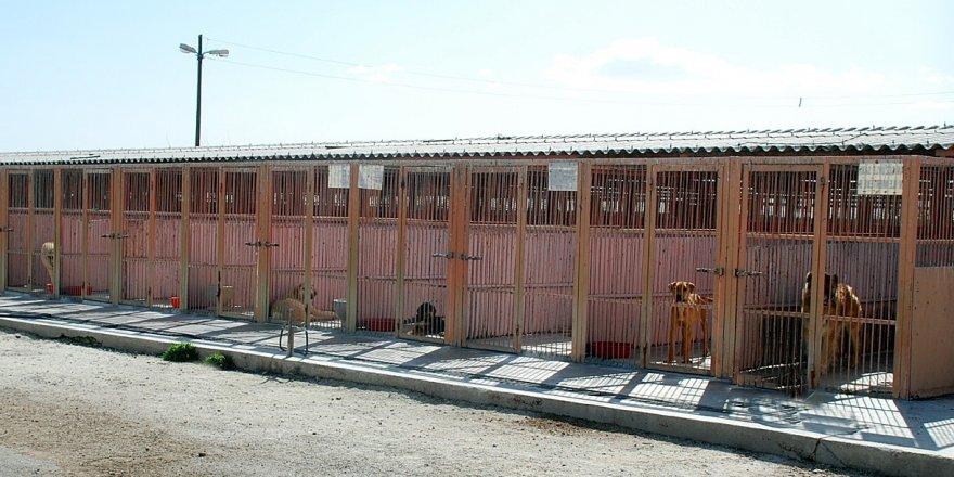Büyükşehir'den sahipsiz hayvanlar için merhamet yuvası