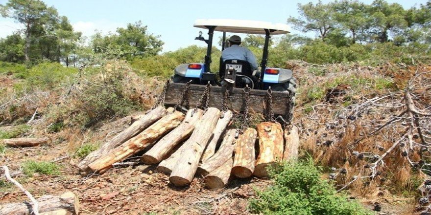 Adana'dan 1 milyon metreküp odun hammaddesi