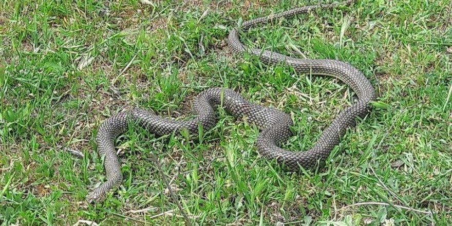 Kabir ziyaretinde yılan saldırısı