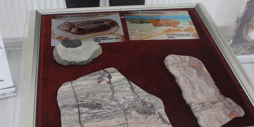 2,4 milyar yıllık fosil dünyada ilk defa Çankırı'da sergileniyor