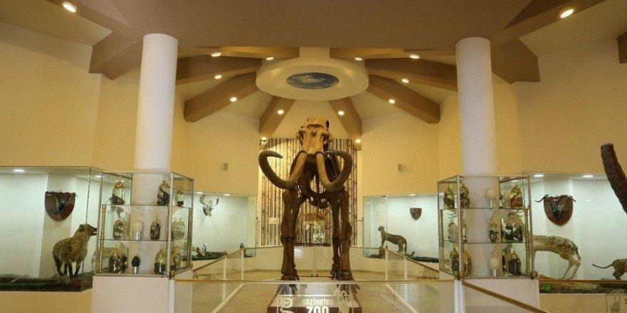 Türkiye'nin tek Zooloji ve Doğa Müzesine yoğun ilgi