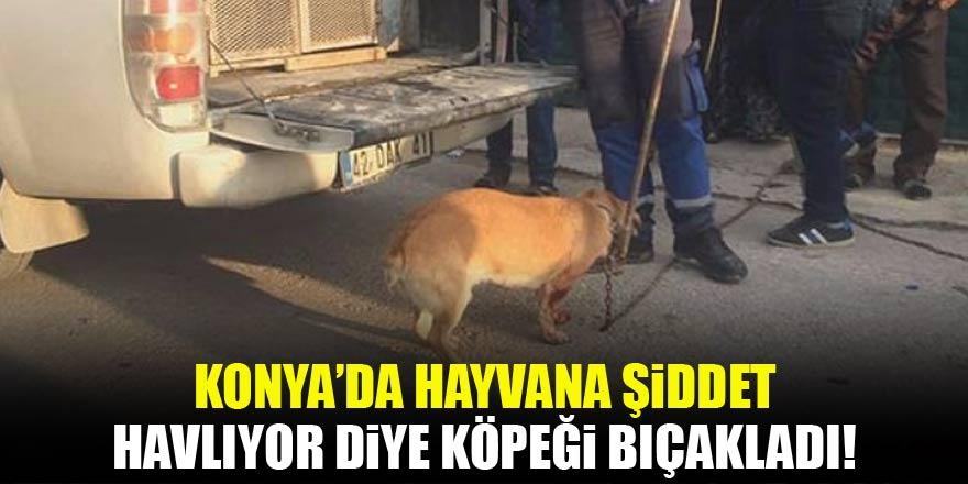 Konya'da hayvana şiddet! Havlıyor diye köpeği bıçakladı
