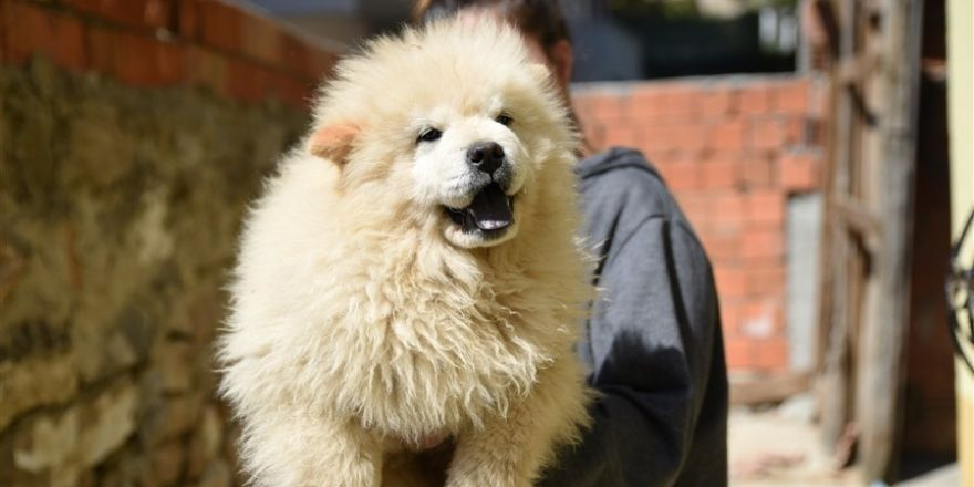 Gümrük kaçağı yavru köpekler ihaleye çıkarıldı