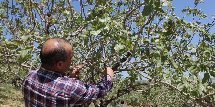 Siirt'te bağ ve bahçeler kontrol edildi