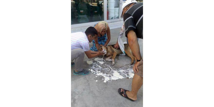 Bodrum'da hayvan katliamı