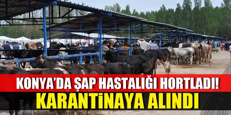 Şap, Konya'da hortladı