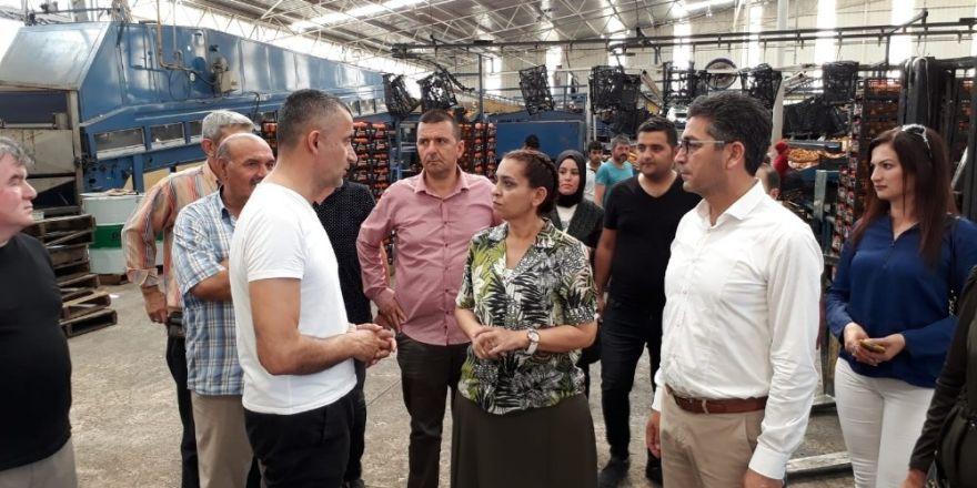 "AK Partili Özboz: ""Finike şahlanacak"""