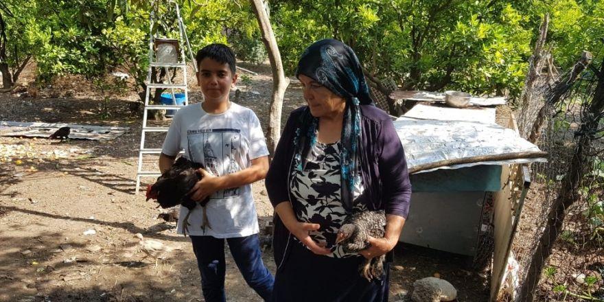 Yeni keşfettiği tavuk ırkına annesinin adını verdi