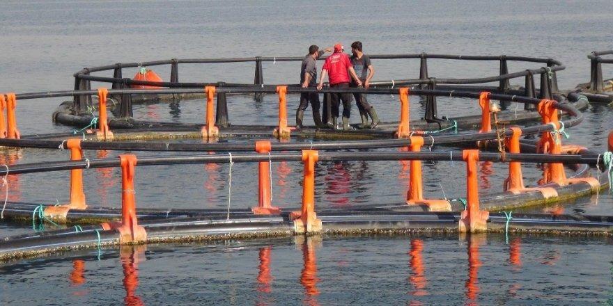 Mersin Kent Konseyi'nden balık çiftlikleri tepkisi