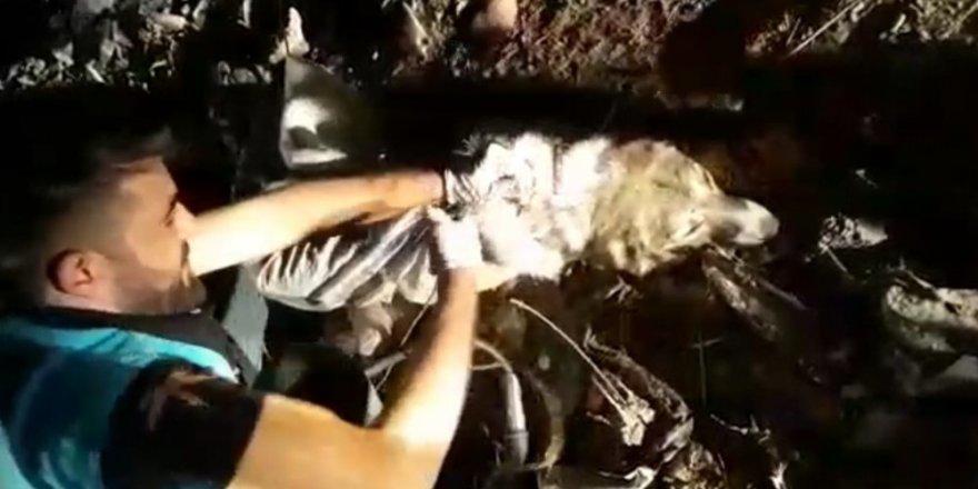 Tellere bağladıkları köpeği çöp konteynerinde ölüme terk ettiler