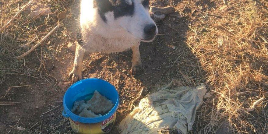 Tüfekle vurulan köpek sulama kanalında mahsur kaldı