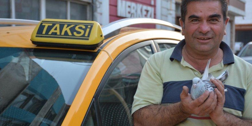 Taksi durağında güvercin besliyor