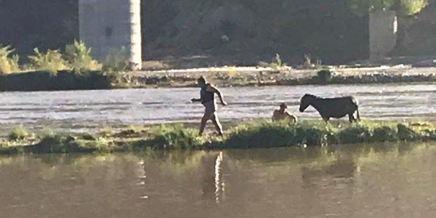 Dicle Nehrinde mahsur kalan eşek itfaiye ekipleri tarafından kurtarıldı