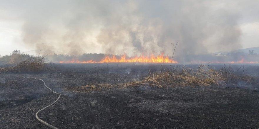Kuşların göç yolundaki sazlık yangını sürüyor